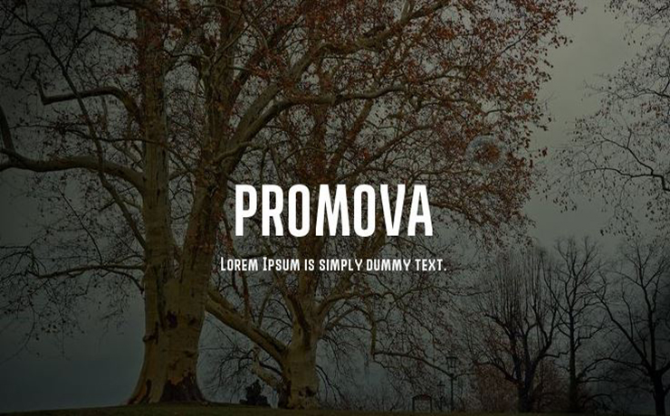 Promova Font Family Free Download